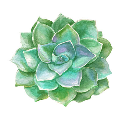 Watercolor succulents cacti.